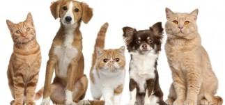 bigstock-Group-of-cats-and-dogs-in-fron-28159637-638x300