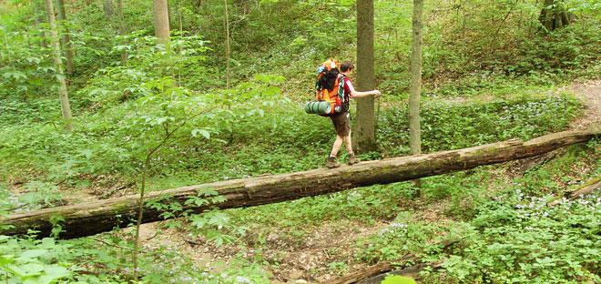Fallen tree path